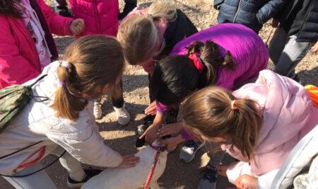 Visita a la protectora d'animals de Sallent